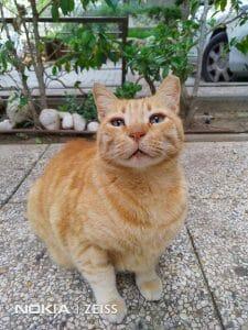 User Pic4 - Ginger Cat